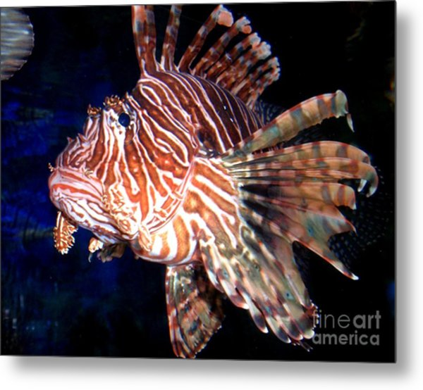 Lionfish The Great Metal Print