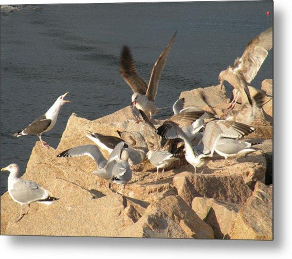 Listen Up Gulls Metal Print by Donald Cameron