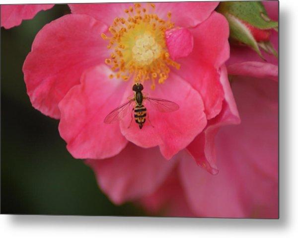 Little Bee Metal Print by Heather Green