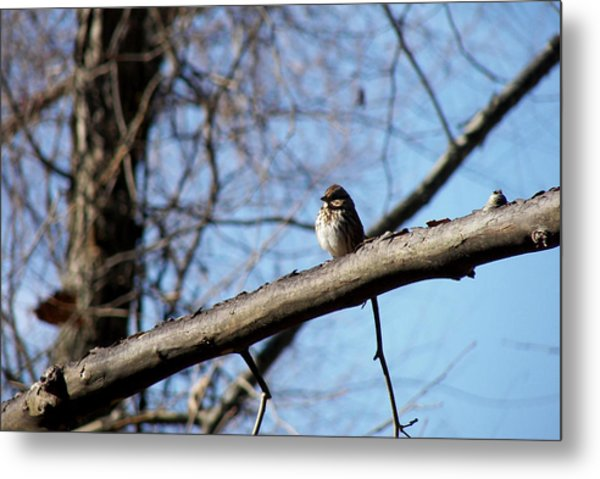 Little Birdie Metal Print by JAMART Photography