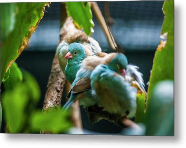 Little Birds Metal Print