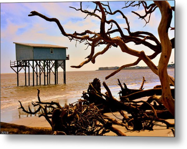 Metal Print featuring the photograph Little Blue Hunting Island State Park Beaufort Sc by Lisa Wooten