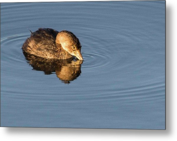 Little Brown Duck Metal Print