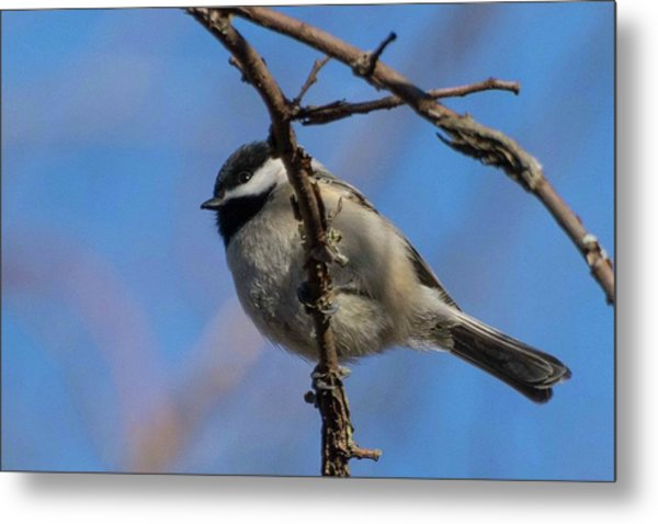 Little Chickadee Metal Print