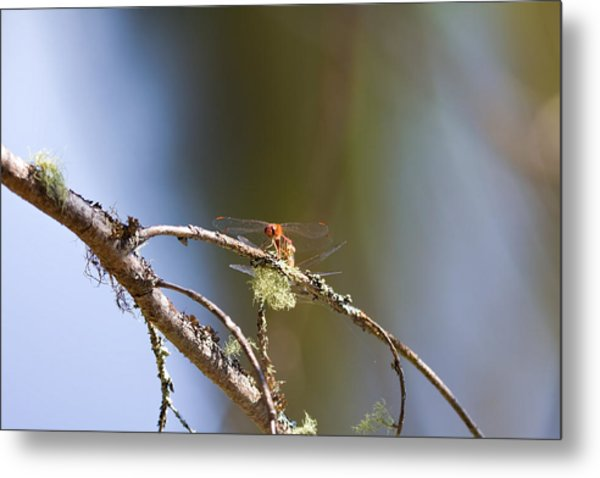 Little Dragonfly Metal Print by Gary Smith