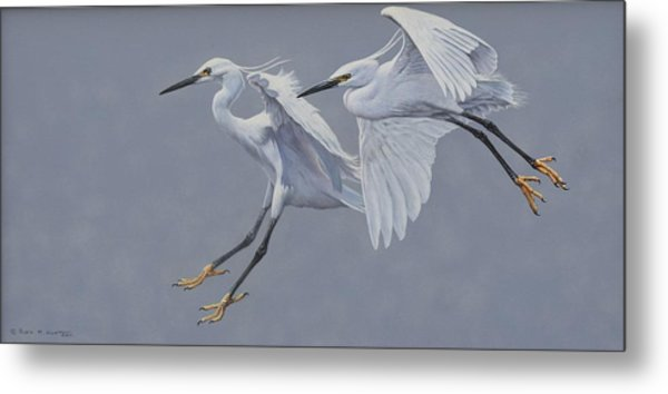 Little Egrets In Flight Metal Print