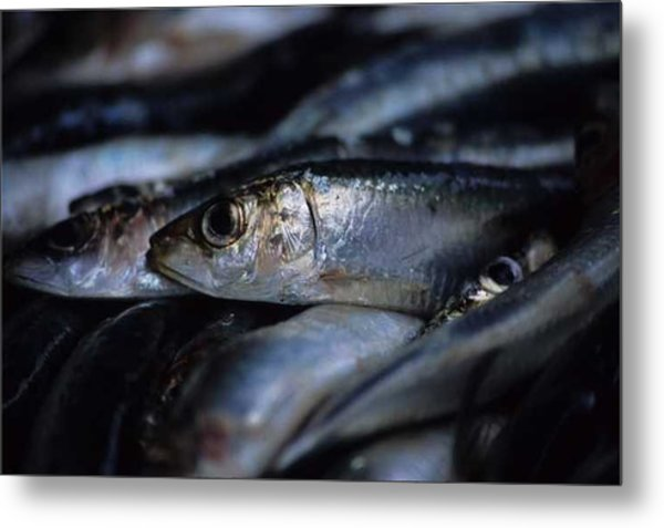 Little Fish At The Rialto Market In Venice Metal Print by Michael Henderson