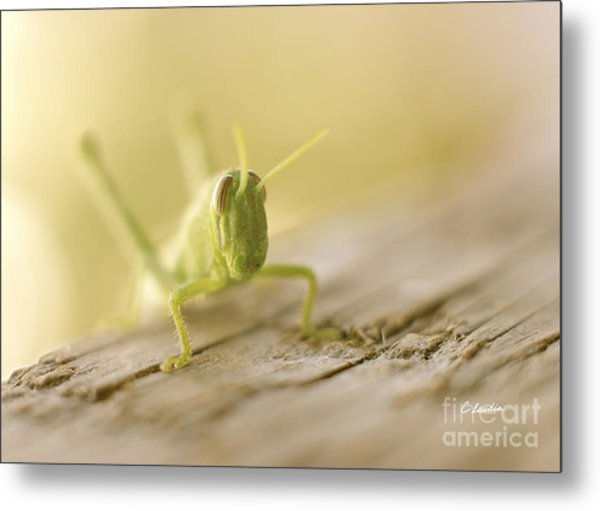 Little Grasshopper Metal Print