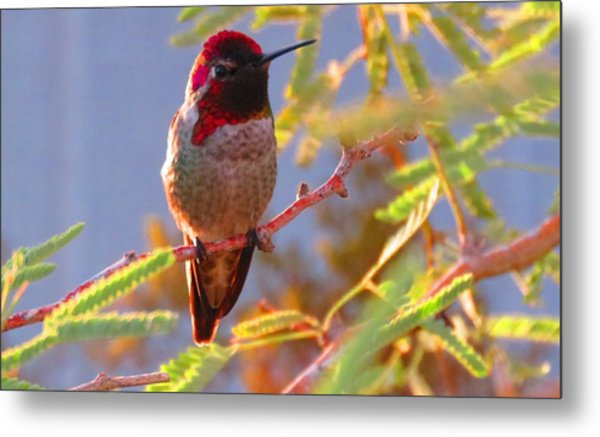 Little Jewel With Wings Second Version Metal Print