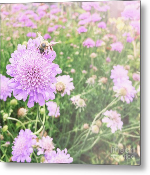 Metal Print featuring the photograph Little Lady On Scabiosa by Cindy Garber Iverson
