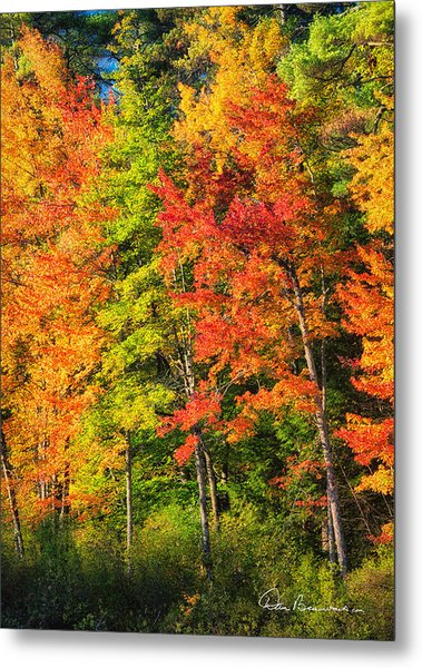 Little Lake Foliage 0515 Metal Print