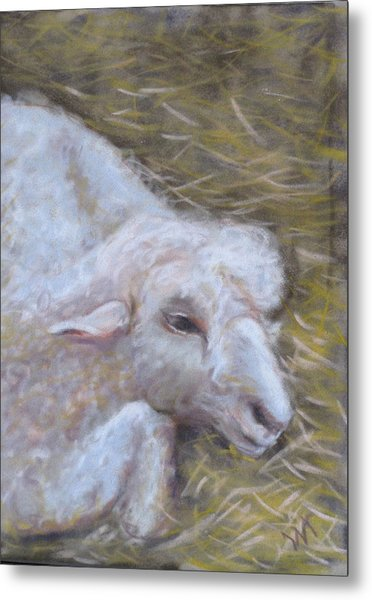 Little Lamb Metal Print by Wendie Thompson