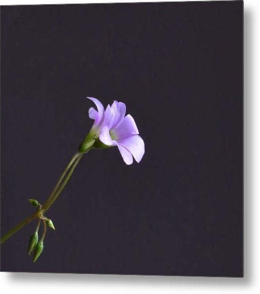 Little Lavender Flowers Metal Print