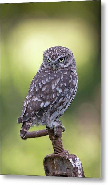 Little Owl Pipe Bender Metal Print