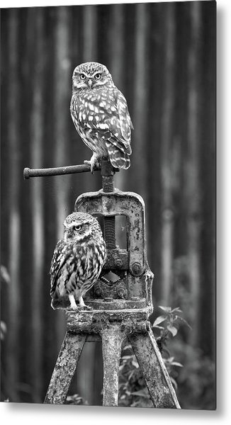 Little Owls Black And White Metal Print