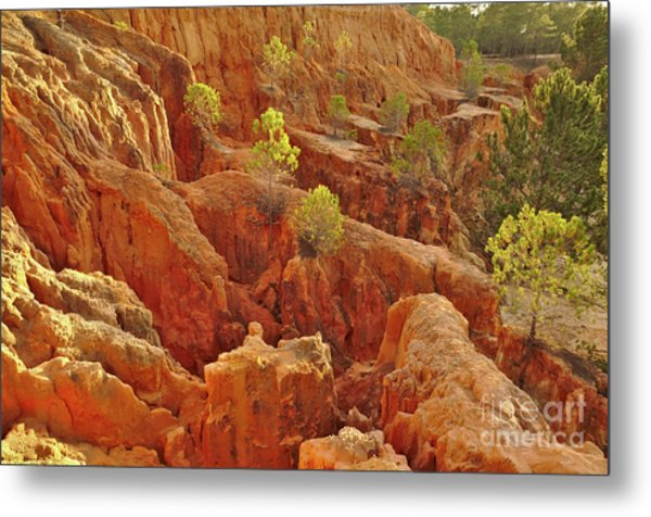 Little Pine Trees Growing On The Valley Cliffs Metal Print