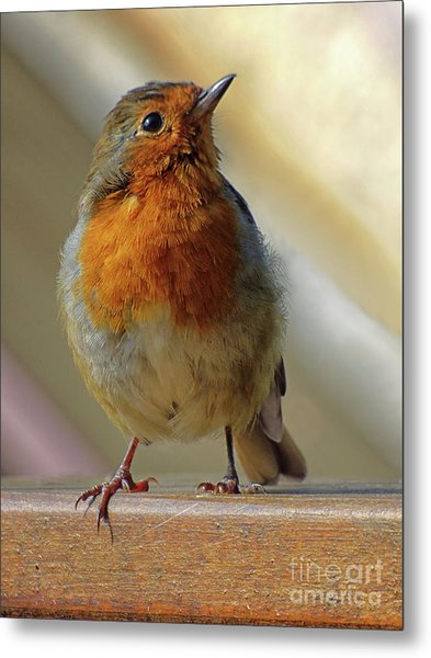 Little Robin Redbreast Metal Print