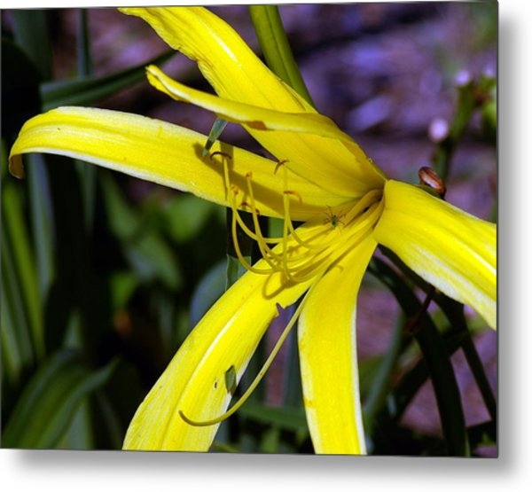 Little Spider Metal Print by Don Prioleau