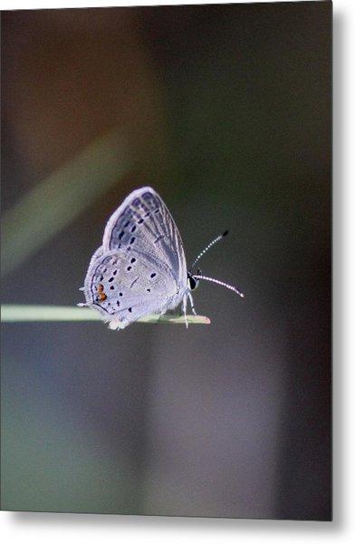 Little Teeny - Butterfly Metal Print
