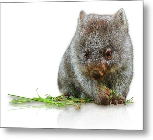 Little Wombat Metal Print
