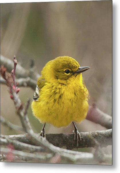 Little Yellow Metal Print