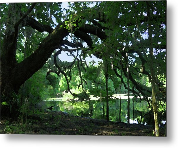 Live Oak Hidden Pond Metal Print by Marnie Hutcheson