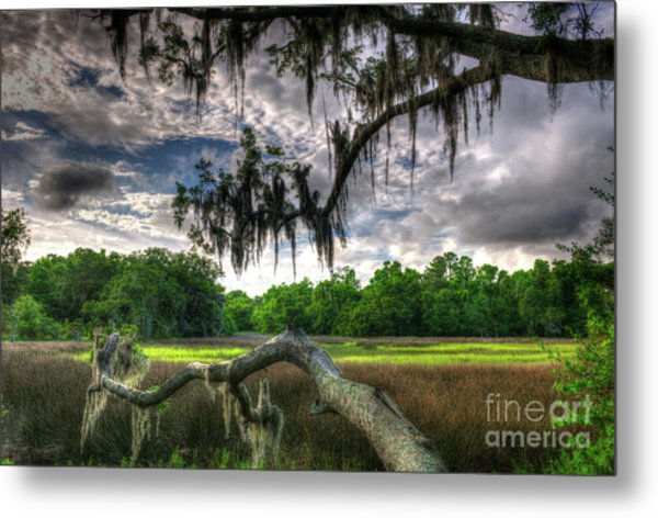 Live Oak Marsh View Metal Print
