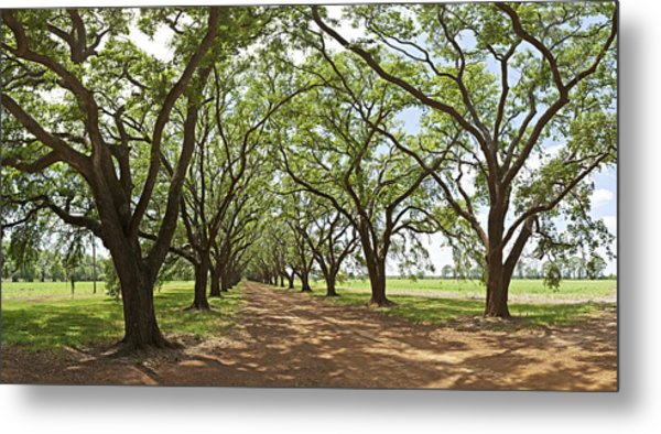 Live Oaks Country Road Metal Print