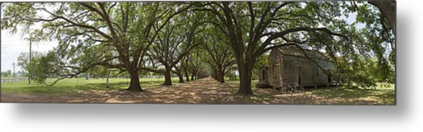 Live Oaks Panorama Metal Print