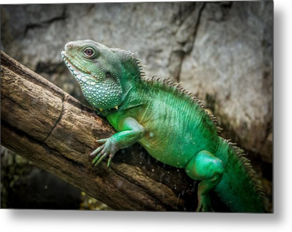 Lizard On Branch Metal Print