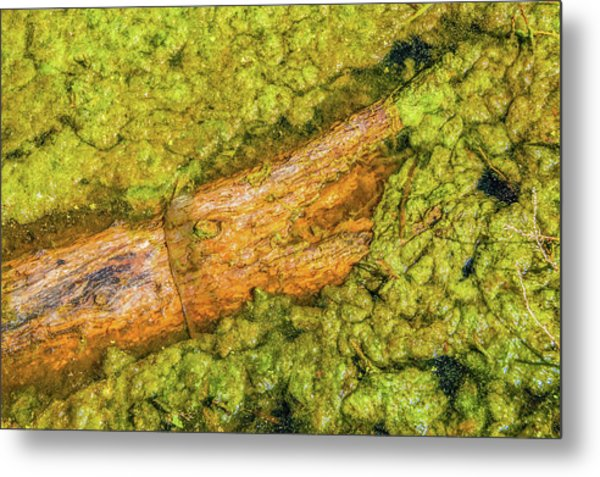Log In Algae Metal Print