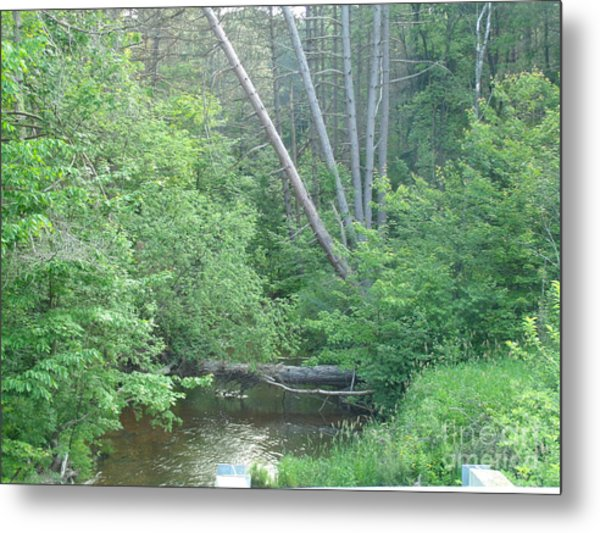 Log In The Woods Metal Print by Melissa Miller
