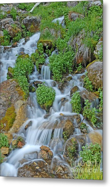 Logan Canyon Cascade Metal Print by Dennis Hammer