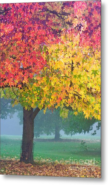 London Autumn Metal Print by David Bleeker