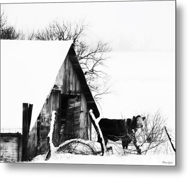 Lone Cow In Snowstorm Metal Print