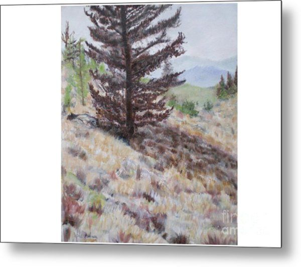 Lone Mountain Tree Metal Print by Hal Newhouser