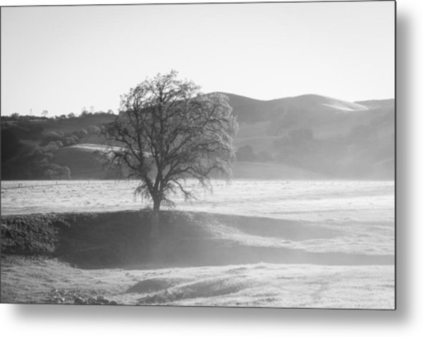 Lone Oak, Clearing Fog, San Andreas Rift Valley Metal Print