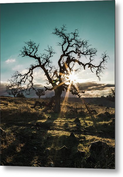 Lone Oak Metal Print