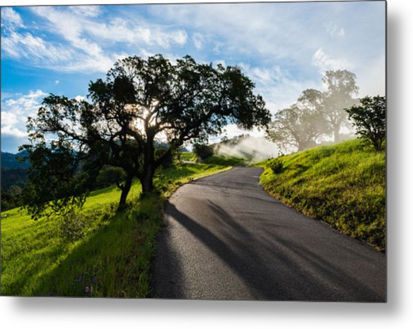 Lone Oak On Figueroa Mountain Road Metal Print