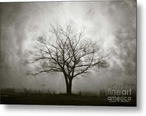 Lone Tree And Clouds Metal Print