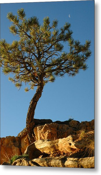 Lone Tree And Moon In Bryce Canyon Metal Print