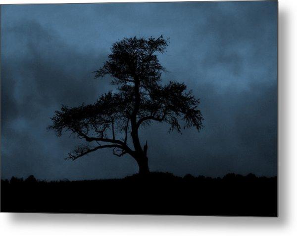 Lone Tree Blue Metal Print