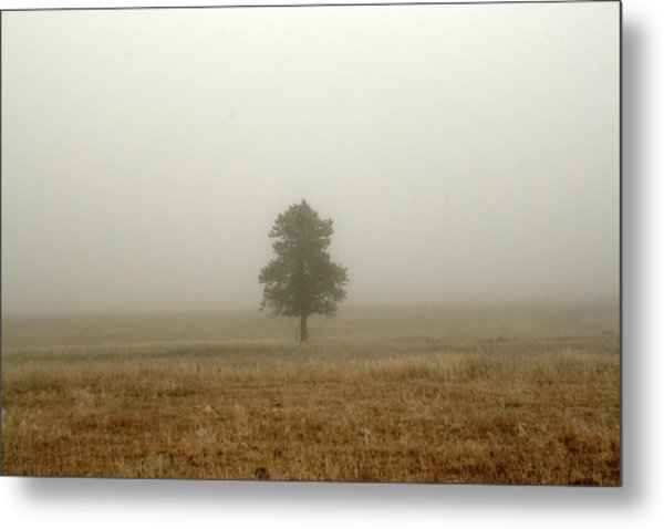 Lone Tree In Fog Metal Print