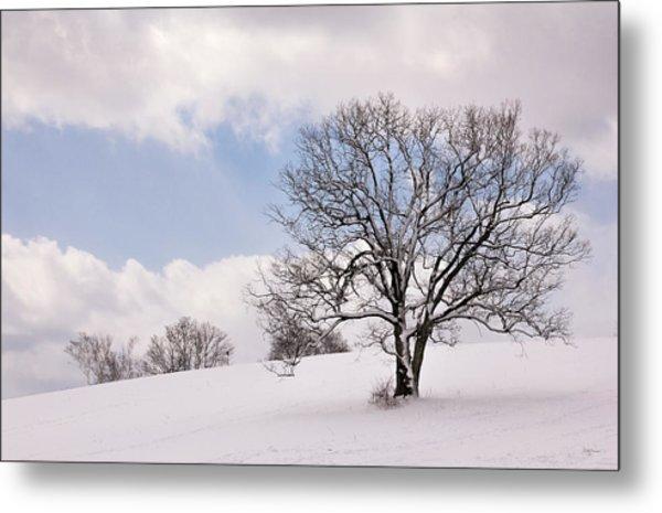Lone Tree In Snow Metal Print