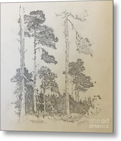 Lonely Pines Metal Print