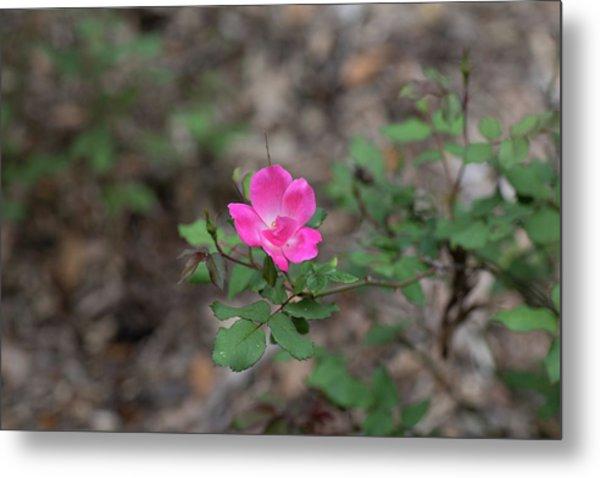 Lonely Pink Flower Metal Print