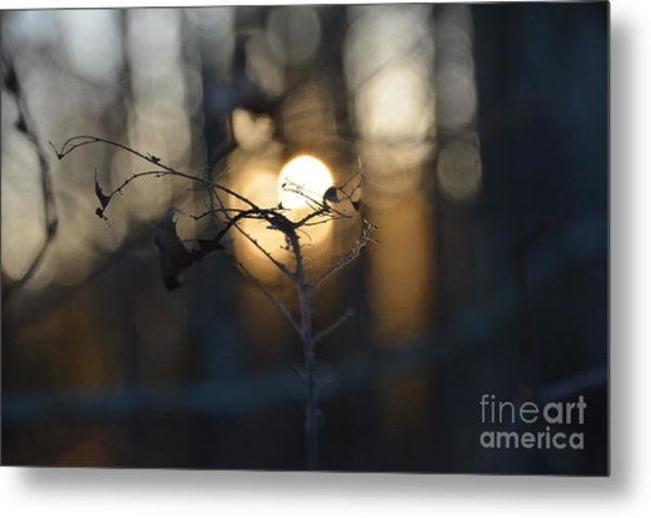 Lonely Tree Branch With Bokeh Love -georgia Metal Print
