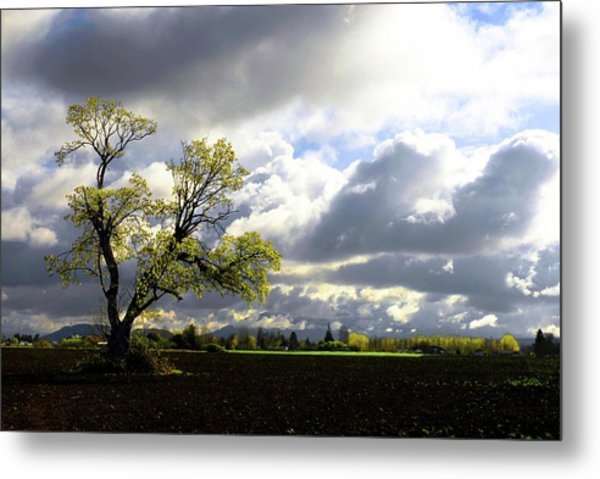 Lonely Tree Is The Summer Metal Print