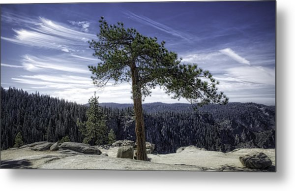 Lonesome Tree Metal Print