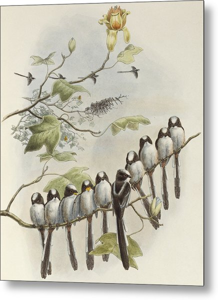 Long-tailed Tit  Metal Print